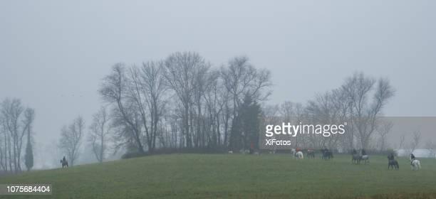 Middleburg fox hunt, Virginia
