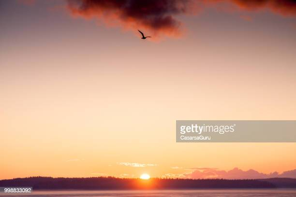 midnight sun setting against golden sky - finland stock pictures, royalty-free photos & images