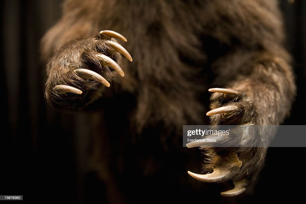 Midsection of a bear : Stock Photo