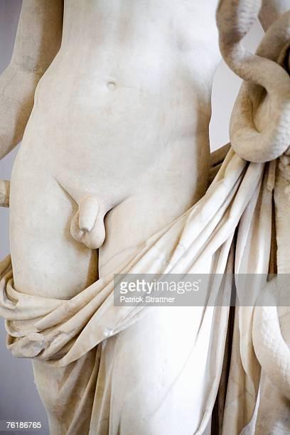 Penis-bilder Human penis