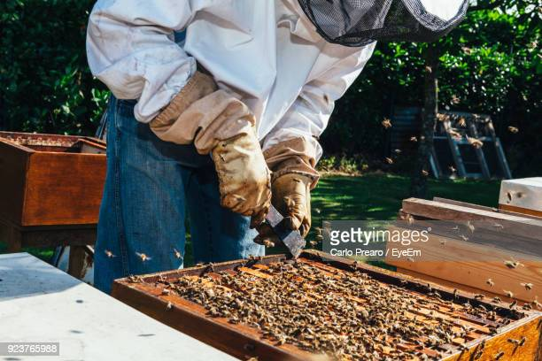 Midsection Of Beekeeper Working At Beehive