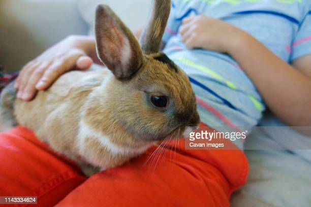 Midsection of boy with rabbit sitting at home