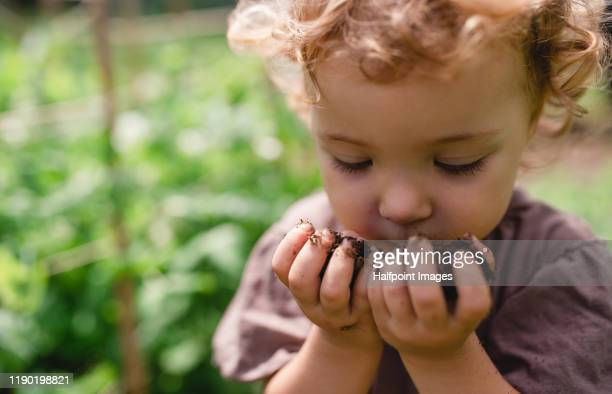 a midsection of cute small child outdoors gardening, holding soil. - vie simple photos et images de collection