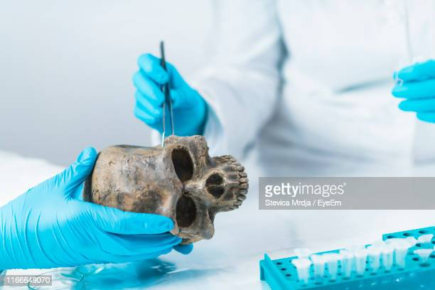 midsection of doctors examining skull in laboratory - bones stock photos and pictures