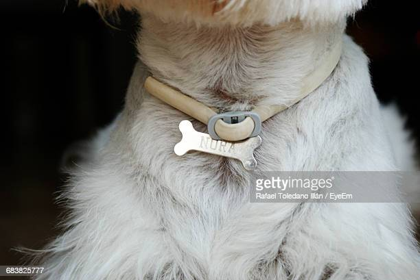 Midsection Of Dog Wearing Bone Collar