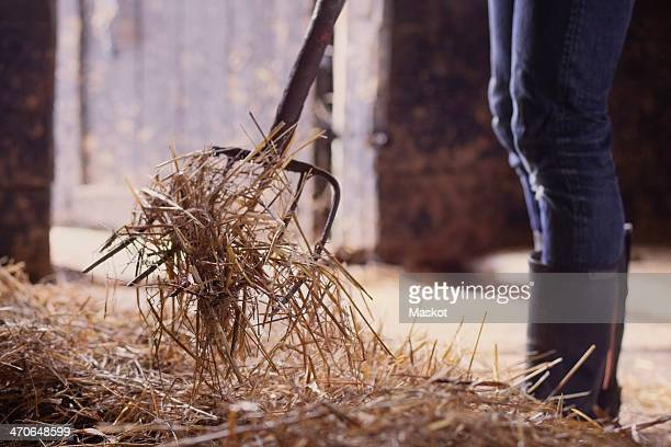 Midsection of farmer shoveling hay in barn