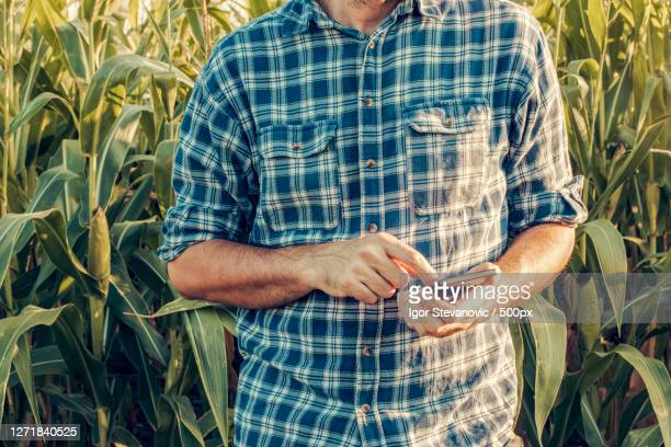 midsection of farmer using mobile phone while standing on agricultural field, novi sad, serbia - スマート農業 ストックフォトと画像