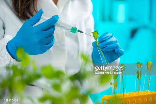 midsection of female scientist injecting mint leaf in laboratory - needle plant part stock photos and pictures