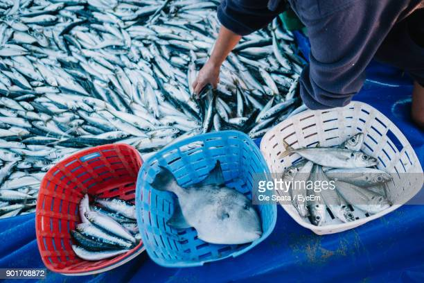 midsection of fisherman with fish at harbor - bucket stock pictures, royalty-free photos & images