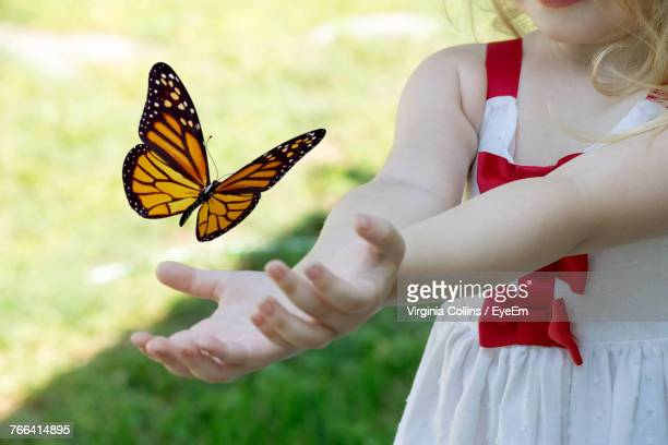 midsection of girl catching butterfly at park - grupo mediano de animales imagens e fotografias de stock