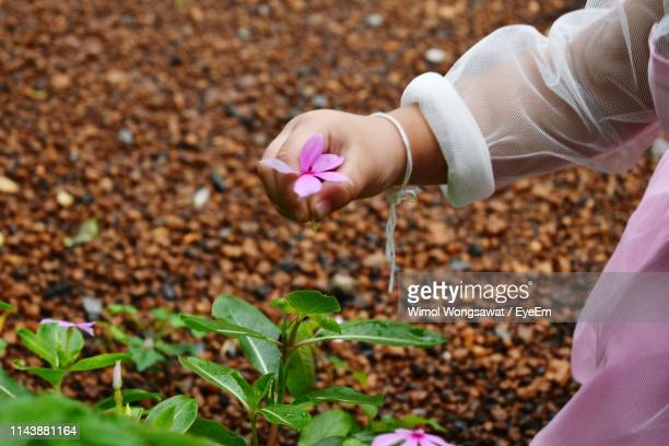 midsection of girl holding pink flower by plant - wimol wongsawat stock photos and pictures