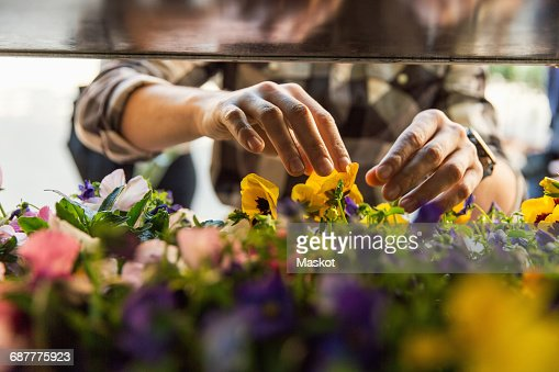 Midsection of male owner arranging flowers at market stall