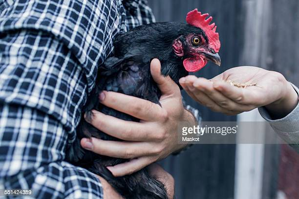 Midsection of man carrying hen while woman feeding it at poultry farm