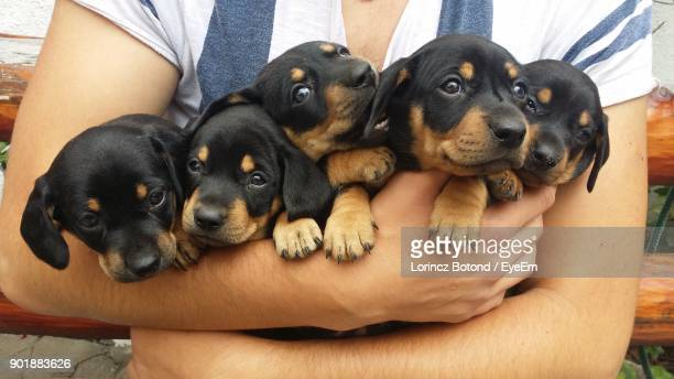 midsection of man carrying puppies - puppy stock pictures, royalty-free photos & images