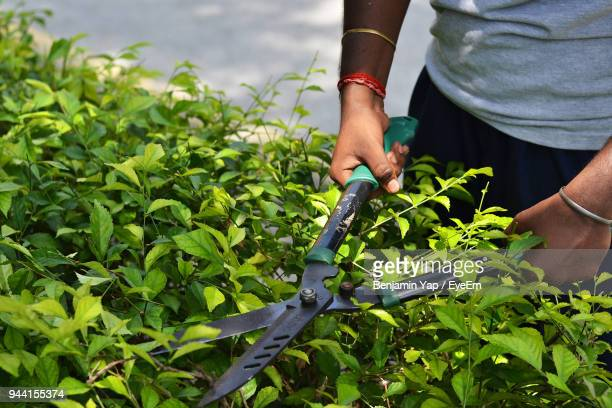 Midsection Of Man Cutting Plants In Yard