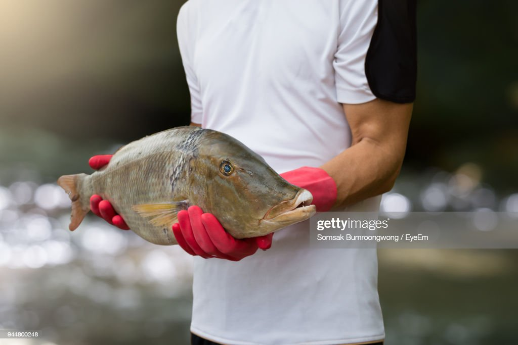 Midsection Of Man Holding Fish : Stock Photo