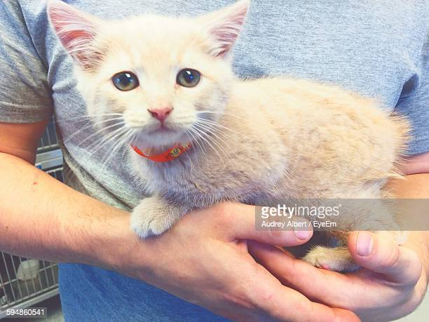 Midsection Of Man Holding Kitten