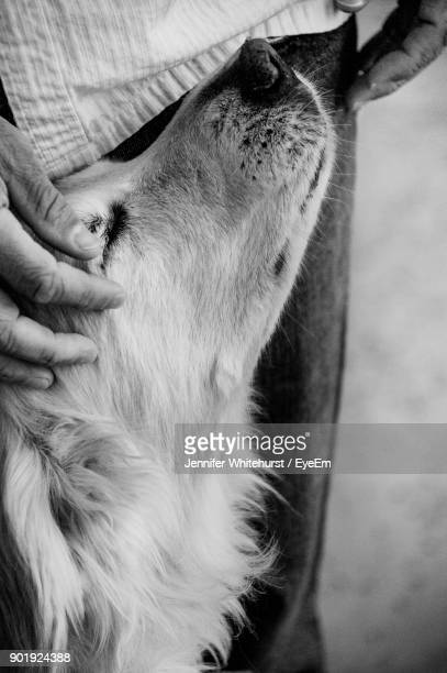 Midsection Of Man With Dog