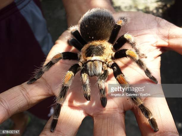 Midsection Of Man With Spider