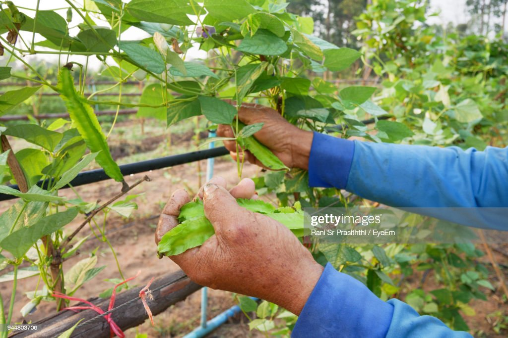 Midsection Of Man Working On Plants : Stock Photo