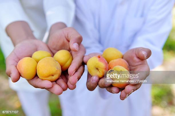 Midsection Of People Holding Apricots In Backyard
