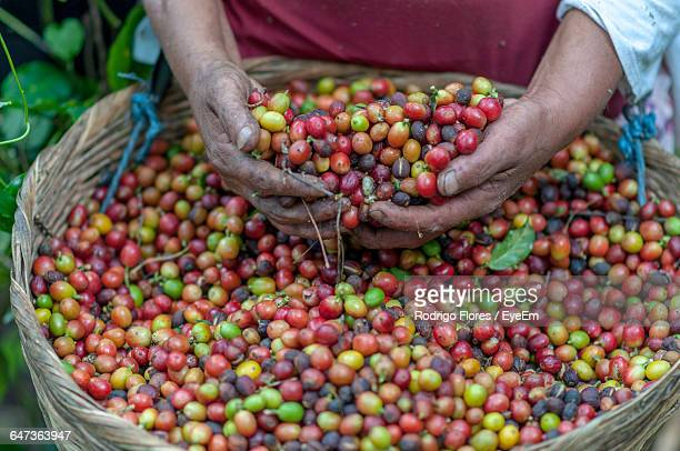 Midsection Of Person Holding Coffee Fruits