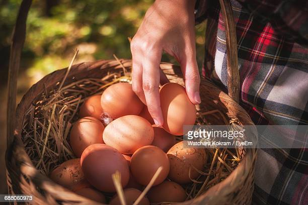 Midsection Of Person Holding Egg Over Wicker Basket At Farm