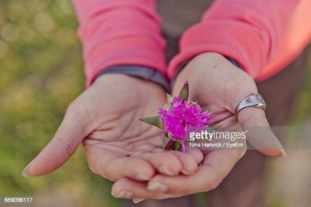 midsection of person holding purple flower - ca nina stock pictures, royalty-free photos & images