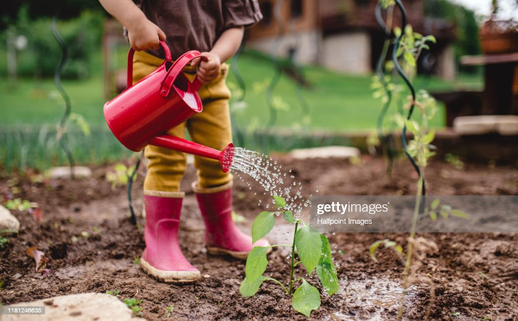 A midsection of portrait of cute small child outdoors gardening. : Foto stock