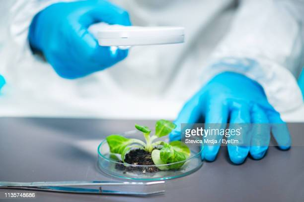 midsection of scientist holding magnifying glass over petri dish with plant sample - green glove stock photos and pictures