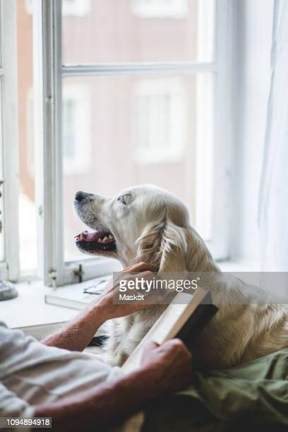 midsection of senior man stroking dog while holding book on bed at home - grupo mediano de animales imagens e fotografias de stock