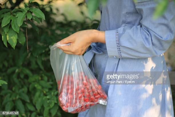 Midsection Of Woman Collecting Fruits From Tree At Farm