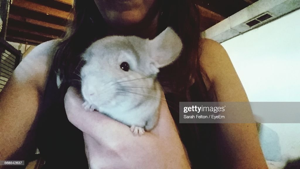 Midsection Of Woman Holding Chinchilla At Home : Stock Photo