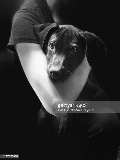 midsection of woman holding dog against black background - domestic animals stock pictures, royalty-free photos & images