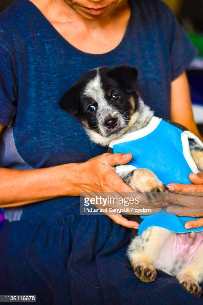 midsection of woman holding dog - pattanasit stock pictures, royalty-free photos & images