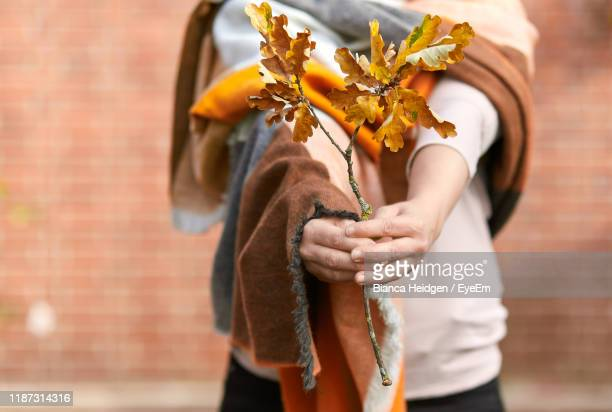 midsection of woman holding dry leaves against wall - twig stock pictures, royalty-free photos & images