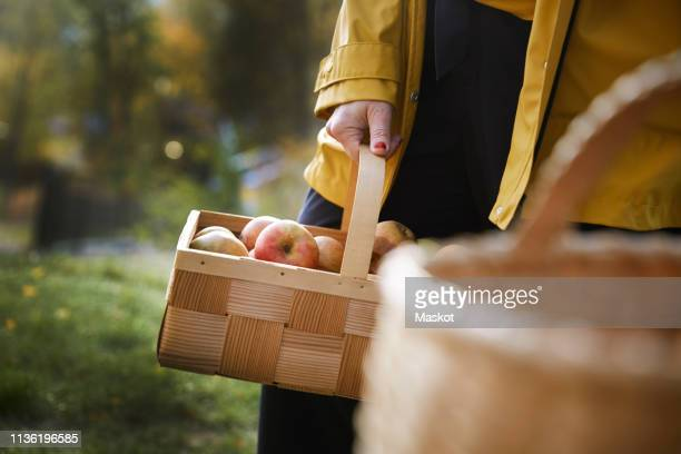 midsection of woman holding fresh organic apples in wicker basket at yard - mid section stock pictures, royalty-free photos & images