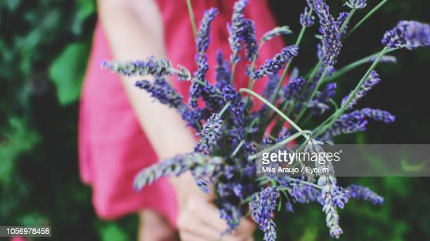 Midsection Of Woman Holding Lavender