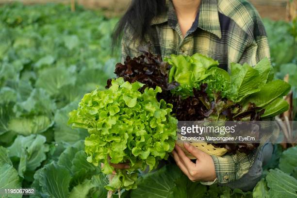 midsection of woman holding leaf - lettuce stock pictures, royalty-free photos & images