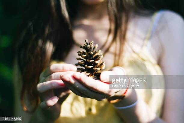 midsection of woman holding pine cone - liu he stock pictures, royalty-free photos & images