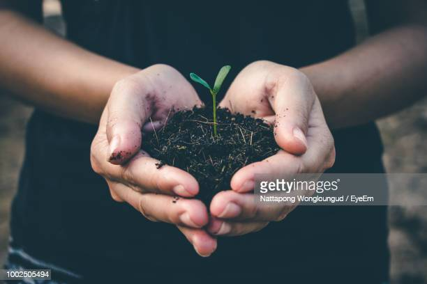 midsection of woman holding sapling - sapling stock photos and pictures