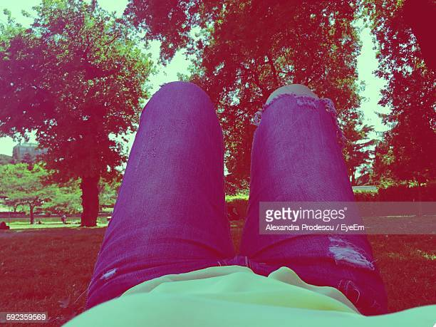 Midsection Of Woman Lying Down On Grass In Park Against Trees
