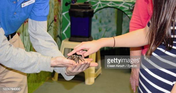 midsection of woman touching spider held by man - eileen kirsch stock pictures, royalty-free photos & images