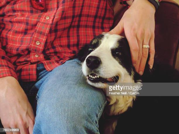 Midsection Of Woman With Border Collie At Home