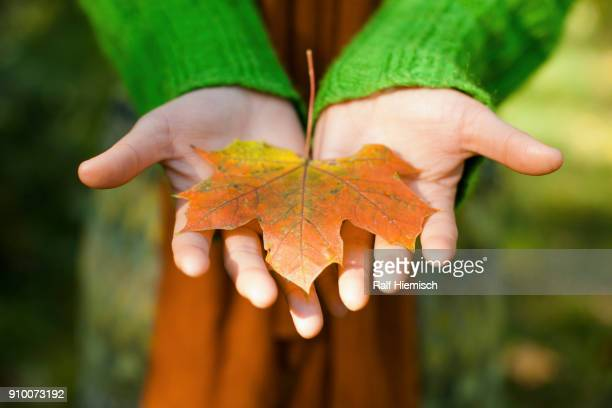 Midsection of woman with dry maple leaf in cupped hands at park