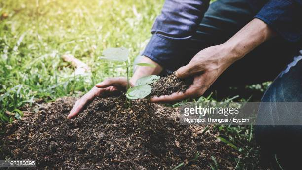 midsection of young man planting sapling on land - planting stock pictures, royalty-free photos & images