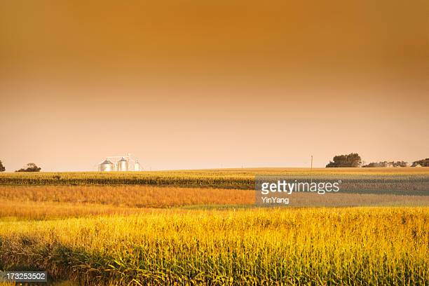 Midwest Corn Field y grano Bin Silo en Harvest