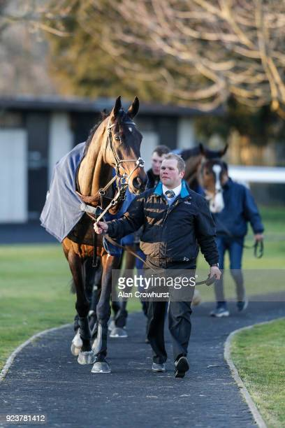 Might Bite before galloping after racing at Kempton Park racecourse on February 24 2018 in Sunbury England
