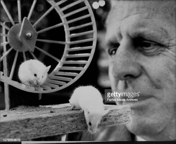 Mr Fred Westphal Managing Director of Rentokil Pty Ltd takes a close up look at two of the mice from the new Mouse HouseRentokil Pty Ltd is the...