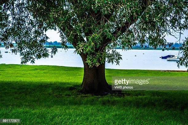 Mighty Oak Tree on Village Green, Bosham